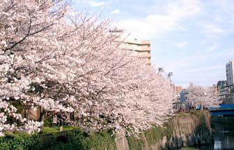 blossom.jpg